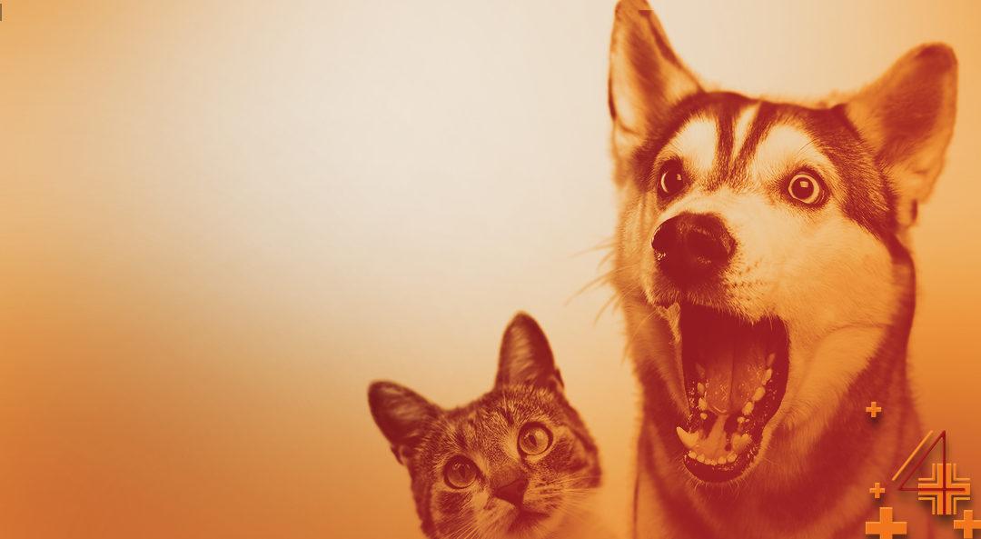 Surprising Facts about Pet CBD