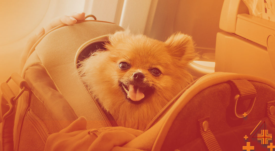 A Natural Way to Calm your Pet while Traveling