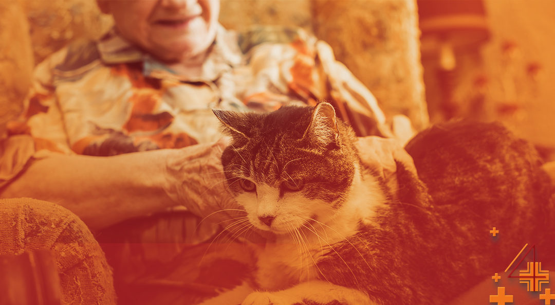 Is CBD Good For Aging Pets?